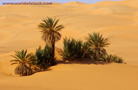 [Kỹ năng sinh tồn] Phần 2: Giành lấy sự sống nơi đầm lầy và sa mạc 12