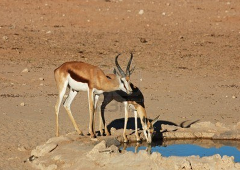 [Kỹ năng sinh tồn] Phần 2: Giành lấy sự sống nơi đầm lầy và sa mạc 13