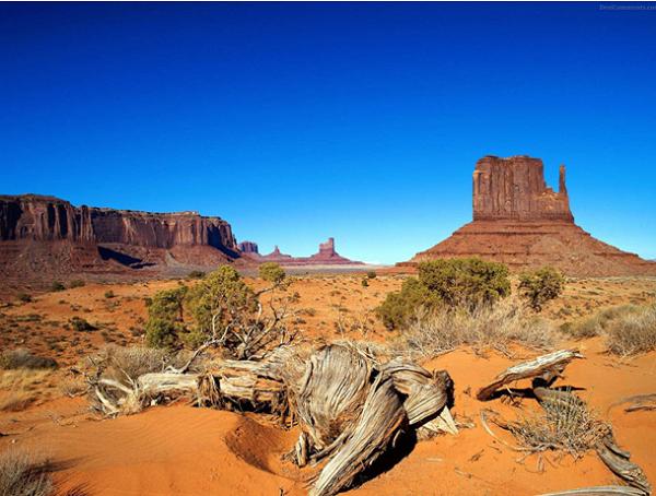 [Kỹ năng sinh tồn] Phần 2: Giành lấy sự sống nơi đầm lầy và sa mạc 7