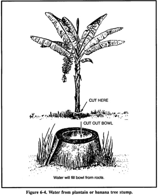 [Kỹ năng sinh tồn] Phần 6: Tìm kiếm nguồn nước - Chìa khóa của sự sống 12