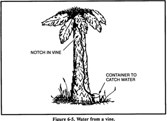 [Kỹ năng sinh tồn] Phần 6: Tìm kiếm nguồn nước - Chìa khóa của sự sống 10