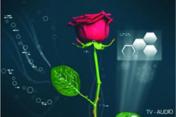 Công nghệ mới: Hoa hồng được cấy mạch điện tử.