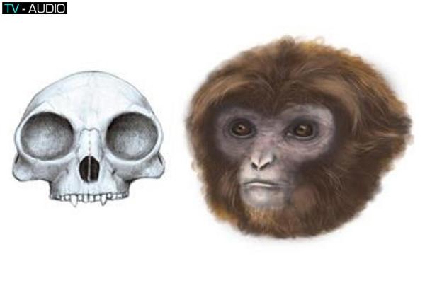 Các loài vô cùng ấn tượng mới được phát hiện 2016.