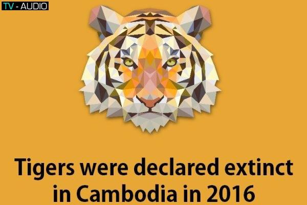 Loài hổ, bạn đã thực sự biết hết về chúng