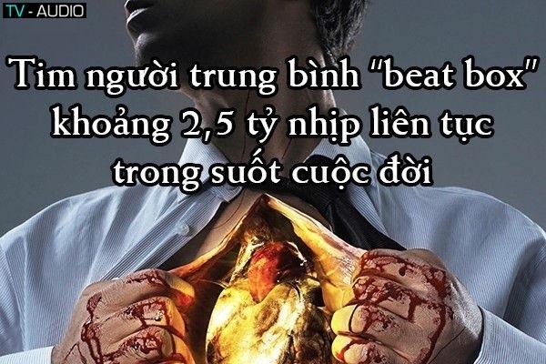 Những điều bạn chưa biết về trái tim.