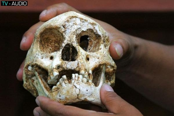 Người lùn từng xuất hiện ở Châu Á 700.000 năm trước.